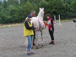 utbildning häst distans